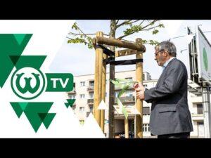 """Read more about the article ALEJA WARCIARZY otwarta na urodziny """"Zielonych"""""""